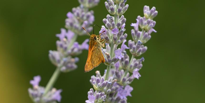 Etude sectorielle - Environnement et biodiversité